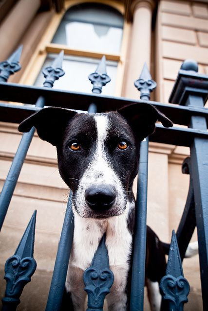 Bringing home a new puppy soon? Check out our tips on how to prepare your yard for a dog and still be able to enjoy your outdoor living space! #dogs #outdoorliving #fencing #yard #dogrun