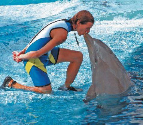 Velger man å feriere eller oppholde seg på Costa Blanca i kortere eller lengre perioder, velger man samtidig et av de mest komplette feriesteder i hele verden. Dyreparker er det mange av, og opplevelsene står i kø. http://www.spania24.no/dyrenes-verden-pa-costa-blanca/