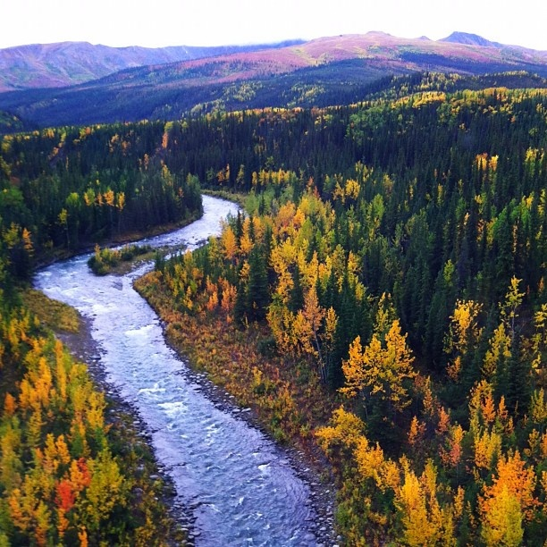 Places To Visit In The Fall In Usa: 73 Best Images About Autumn In Alaska On Pinterest