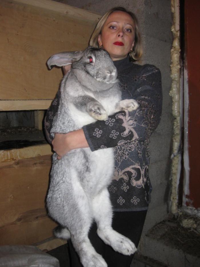 Крупные породы кроликов Серые и Белые великаны