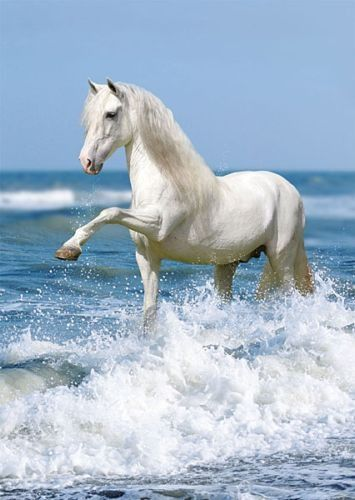 White Beach Horse- Yes, horses play in water too!