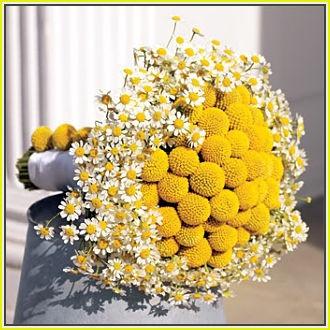 Chamomile & Craspedia bouquet
