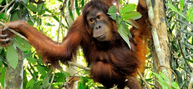 SADEMETSÄT WWF  ©Fletcher Et Baylis / WWF Indonesia