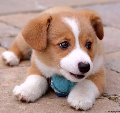 Cute Puppies and Kittens
