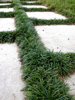 25 best ideas about grass alternative on pinterest lawn for Alternative garden edging