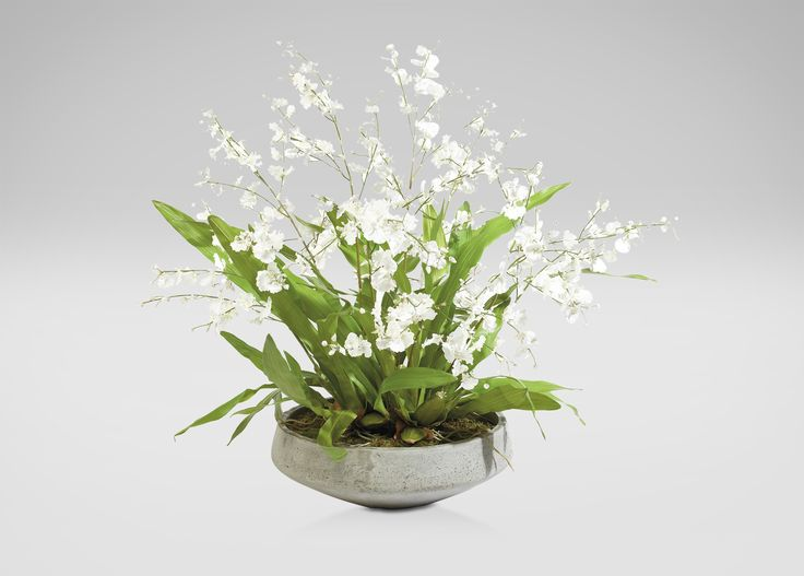 White Oncidiums in Aged Bowl  