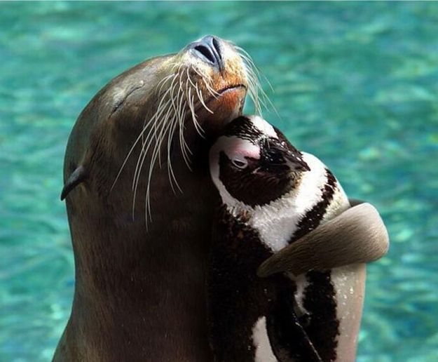 This sea lion and this penguin.