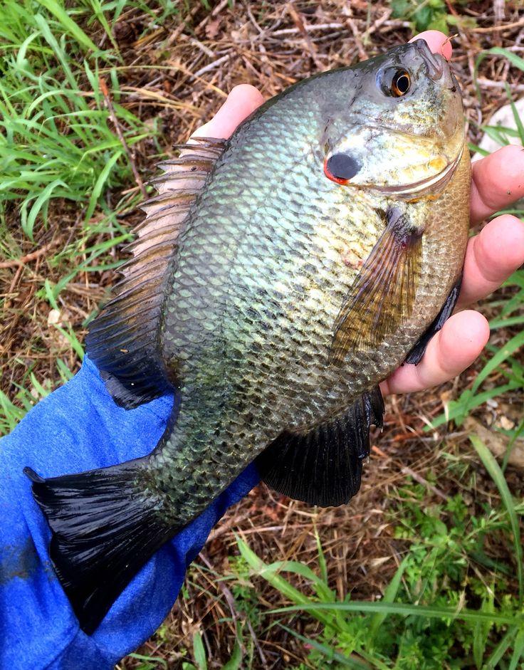 1000 Images About Fishing On Pinterest Largemouth Bass Crappie Fishing And Crappie Fishing Tips