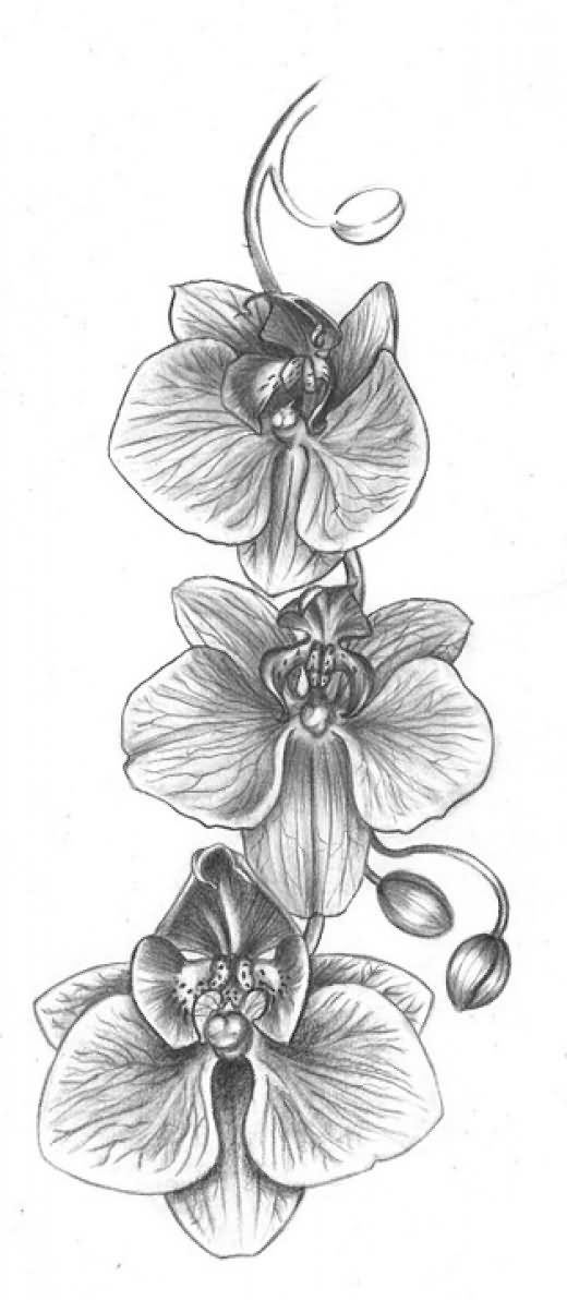Grey Ink Orchid Flowers Tattoos Design
