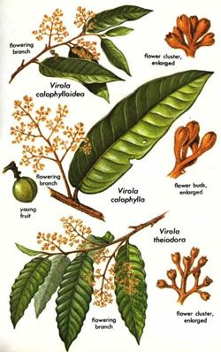 Plants that Contain DMT (dimethyltryptamine)...a chemical that is produced in our pineal gland (third eye)..when we are first born, when we dream in heavy REM sleep, and when we die or near death. Pretty awesome!