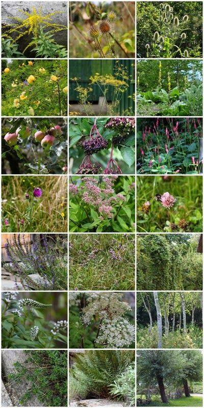 PLANTER I DEN NORDISKE HAVE - Plants for the nordic garden