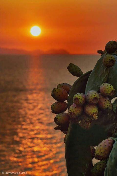 Sicily Fruit during the sunset #sunset #sicily #fuit