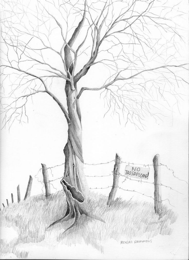 Pencil drawing of tree