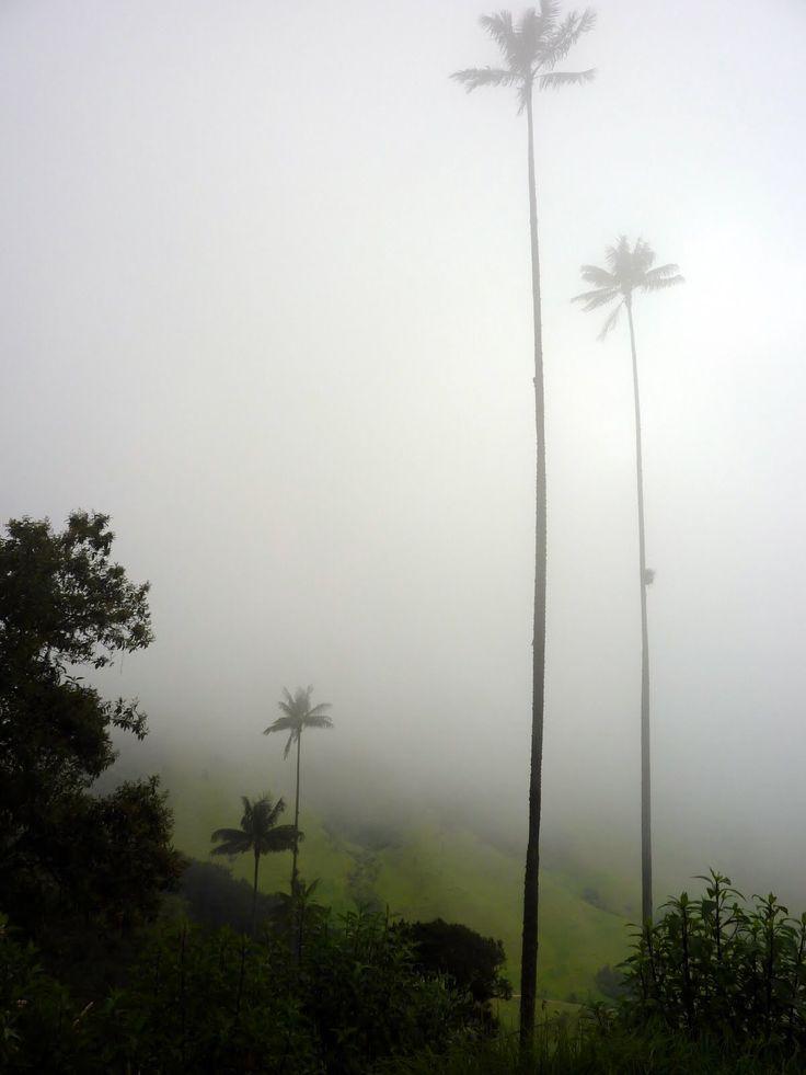Valle de Cocora; Colombia