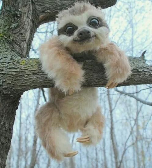 He's so darn cute, I hope he's real and not just a stuffed toy.