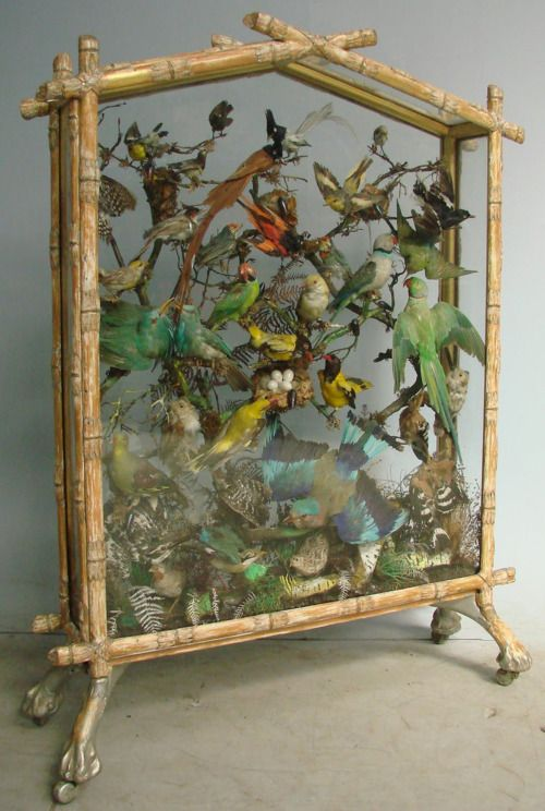 A 19th century taxidermy display. The Victorians were avid collectors.