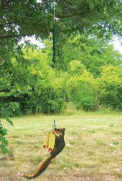 This Squirrel Feeder is an absolute hoot! Put up a Squngee and watch squirrels bungee jump for corn--this squirrel feeder promises action packed entertainment. The Squngee Bungee Cord is a squirrel fe