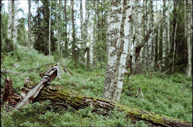 Старые деревянные кресты сгнивают у основания и падают.  Люди - паломники или туристы - поднимают их и прислоняют к деревьям.  - Александр Савельев - ФотоХроника -