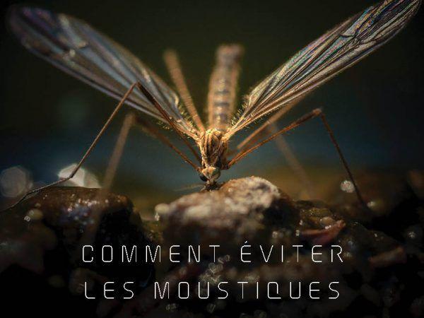 Comment les moustiques choisissent leurs victimes et trucs pour les éviter et soulager les piqûres.