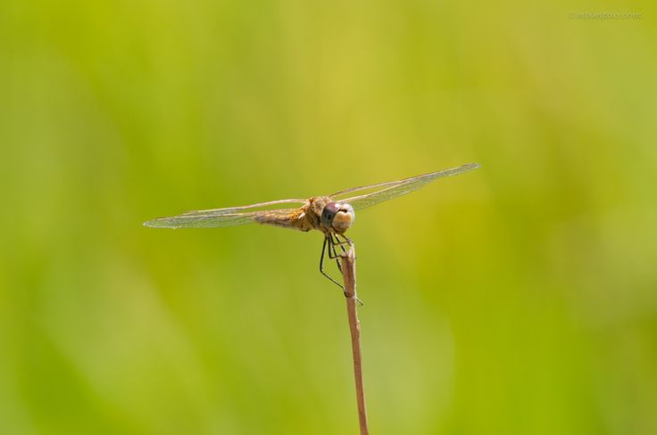 Photograph Dragonfly 2 by Marco P on 500px