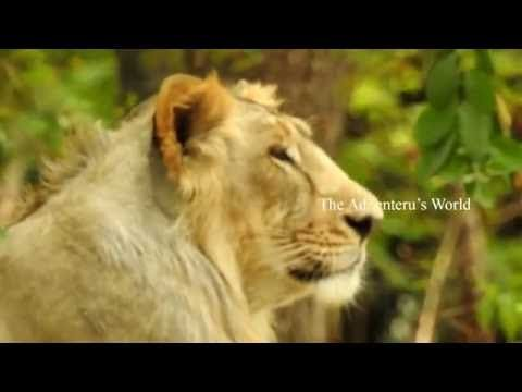 Photography gives a Creativity ideas which they focus on one point of they are in the magical world which they wanted to capture. Wild life photography gives...