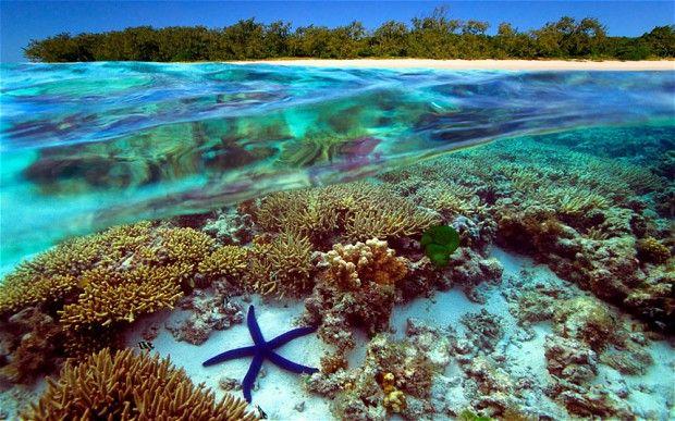 underwater view of the great barrier reef in australia