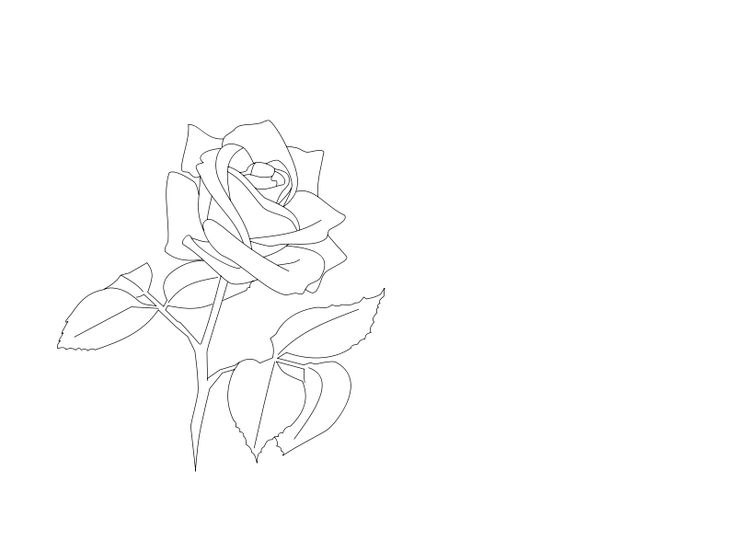 Line Art Rose Flower : Best the rose images flower painting prints and