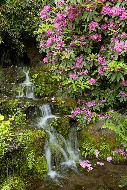 219 best images about Garden For the Love of Rhodies on