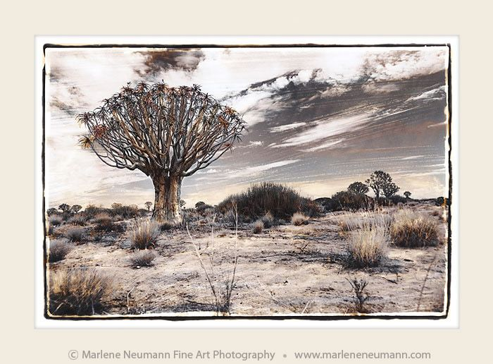 """""""Tribal Tree"""" - Timeless black and white Fine Art Photography by Master Fine Art Photographer Marlene Neumann. Decor. Gifts. Art for your home and office. www.marleneneumann.com"""