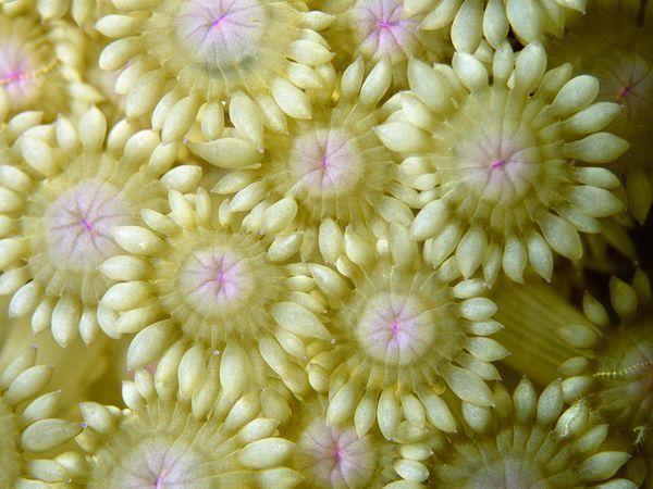 Coral Reino Fotos, Fotos de Coral, la galería de fotos, Galería de Fotos, Fondos de Escritorio - National Geographic