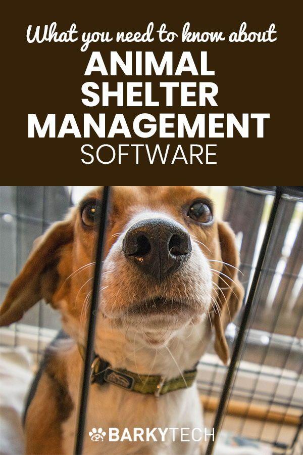 B2b Pettech Animal Shelter Management Software Animal Shelter Animal Rescue Fundraising Animals