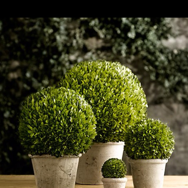 11 Best Images About Coffee Table Centerpieces On