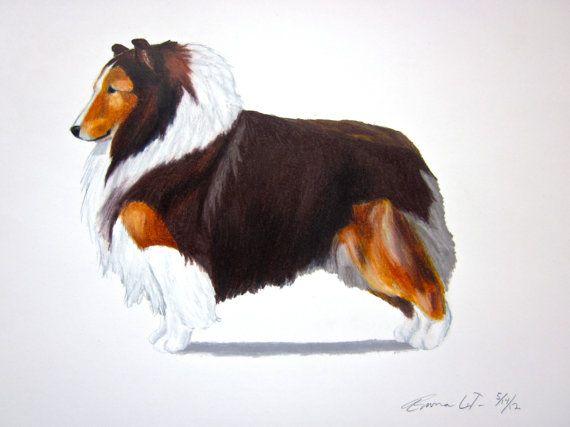 Shetland Sheepdog Breed Standard 11 best Weird Pet Fact...