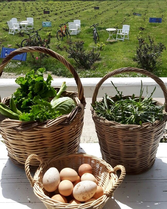 Mykonos Vioma farm's fresh produce.  Life at the countryside...