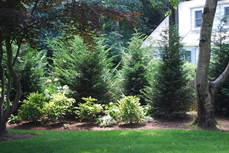 Awesome Fence With Evergreen Plants Landscaping Ideas 103 – Gina Perkins