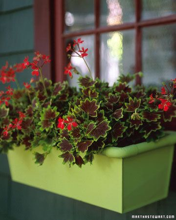 Bay Window Garden Ideas find this pin and more on articles on teachers landscaping 60 Great Ideas For The Garden