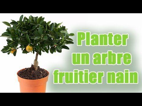 Les 25 meilleures id es de la cat gorie arbres fruitiers nains sur pinterest jardinage et - Comment planter un cerisier ...