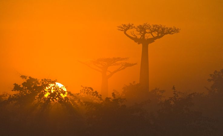 Morning sun baobab by ANDREY GUDKOV on 500px