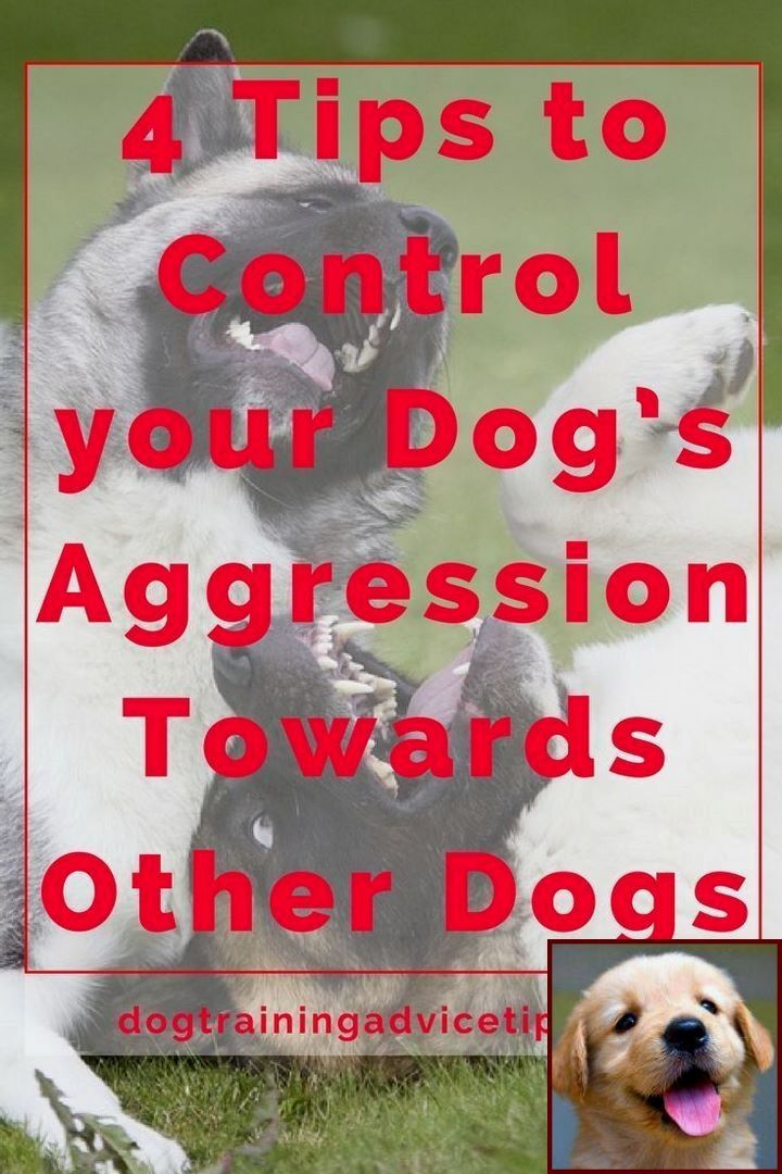 House Training A Puppy Schedule And Dog Training Prison Programs
