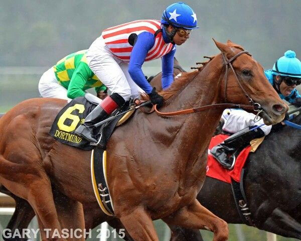 17 Best Images About Thoroughbred Horse Racing ♘ On