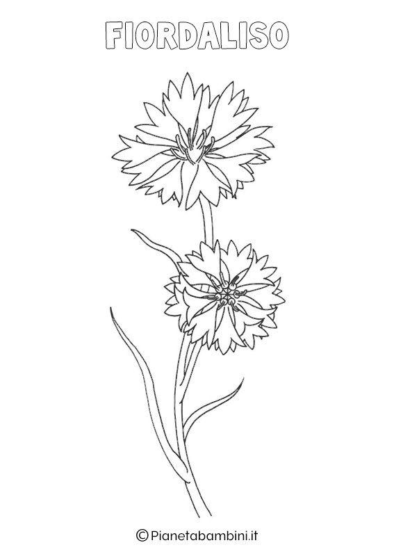 Disegni Di Fiori Di Primavera Da Stampare E Colorare Disegno