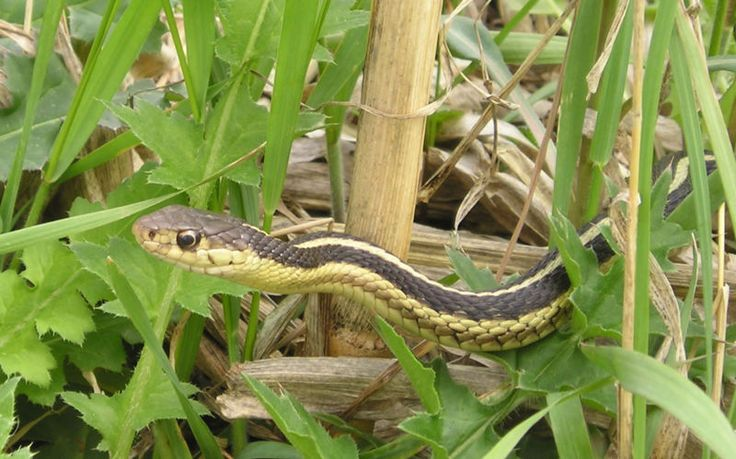 Keep snakes out of your yard by leaving hair from your hairbrush around your yard.
