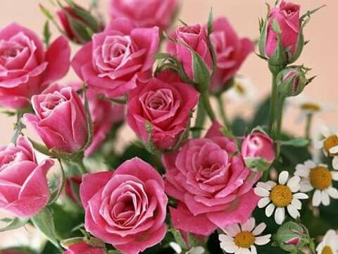 Дорогие друзья!С первым днем Весны!Добра , Мира и Благоразумия!