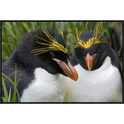 """East Urban Home 'Macaroni Penguin Pair' Framed Photographic Print on Canvas Size: 20"""" H x 30"""" W x 1.5"""" D"""