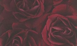 Tapet hartie rosu trandafir 525625 Rasch