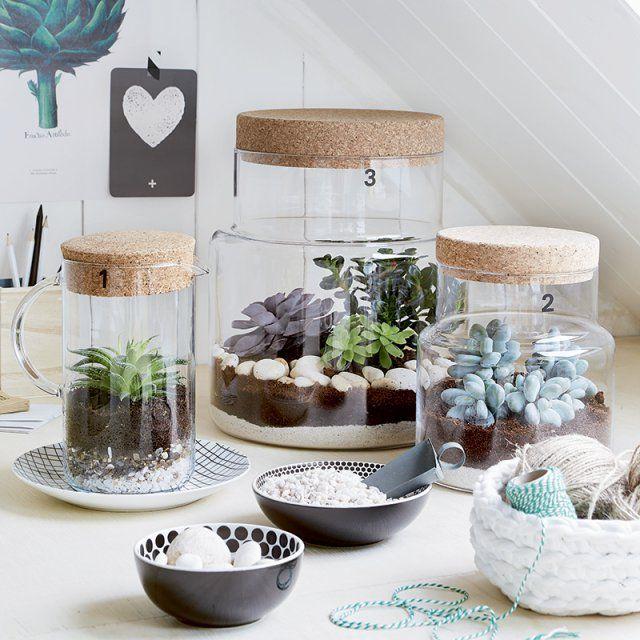 Des petits jardins dans des bocaux de cuisine