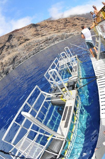 Isla Guadalupe White Shark Cage Diving   Shark Diver