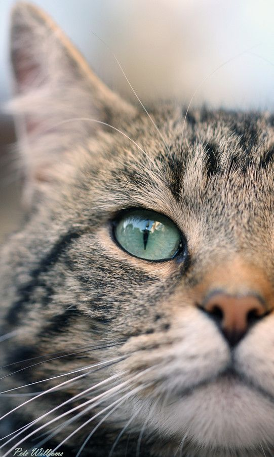 my Eye by Pete Williams on 500px
