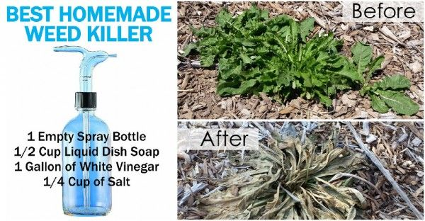 Best-Homemade-Weed-Killers-600x312