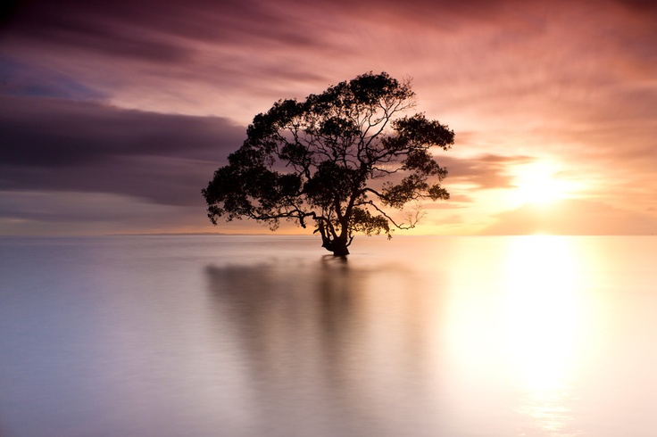 "Beautiful tree.   ""Isolation"" by Andrew Tallon"